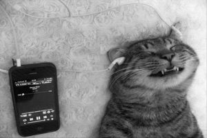 cat-listening-to-headphones-funny-animal-pictures-300x200