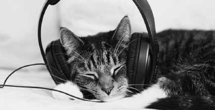 cat-with-headphones-e1458783711313